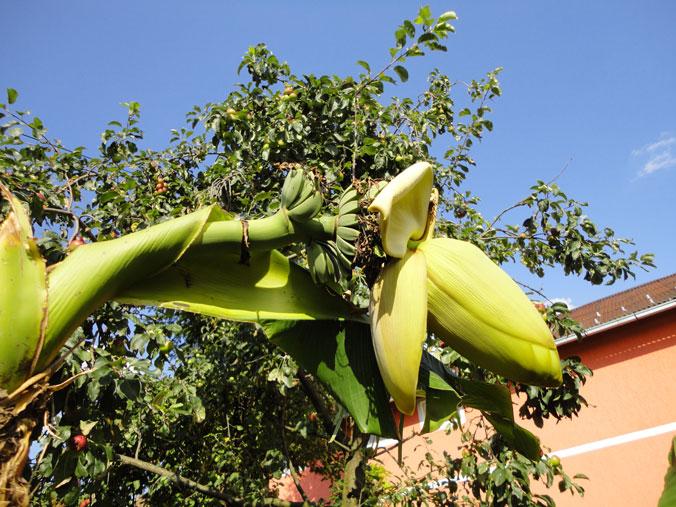 banana9