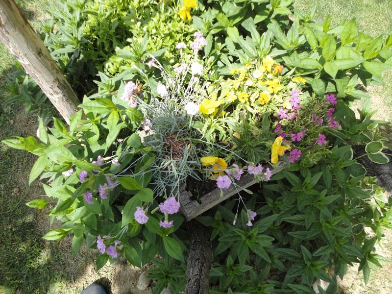cvijece_u_panju6