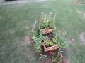 cvijece_u_panju4